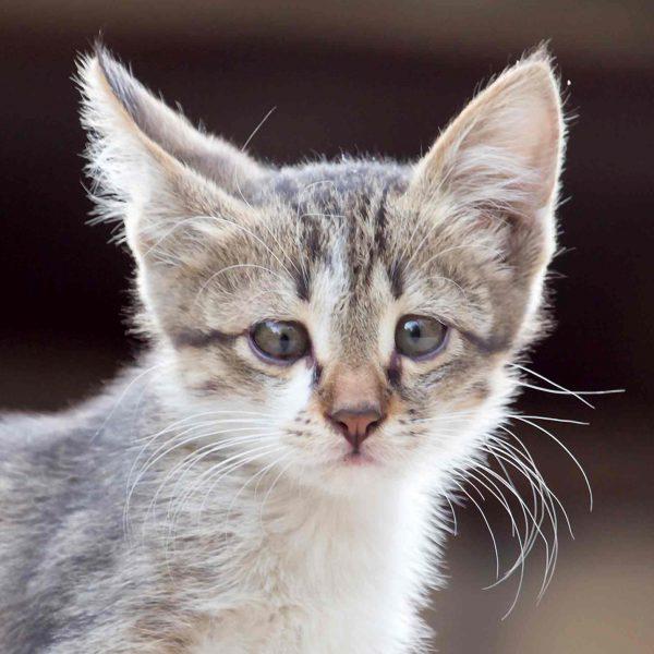 photo-kitten