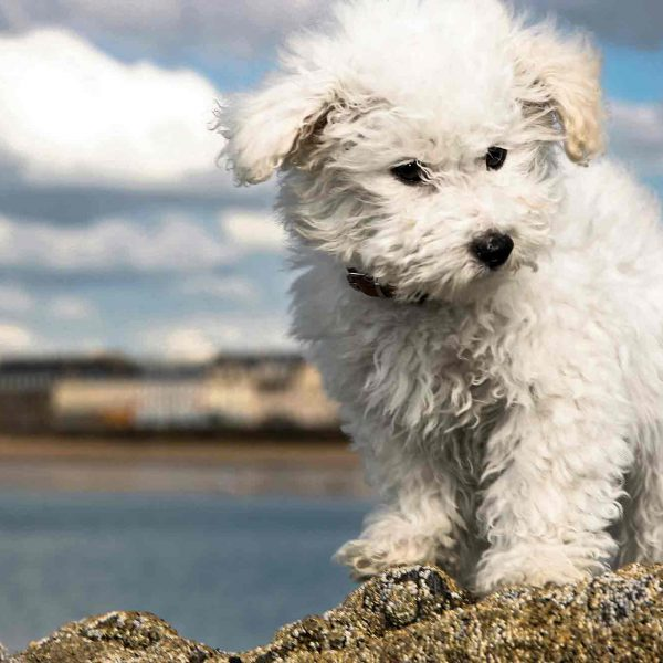 photo - puppy